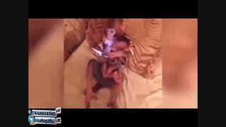 مامان میمونه داره تبلت به بچش یاد میده!