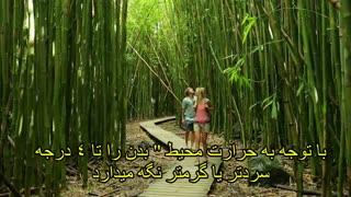بامبو گیاهی متواضع و ثروتی پنهان