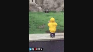 حمله شیر به کودکی در باغ وحش