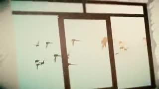 موزیک ویدئو کبوترها