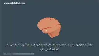 ذهن آگاهی و نحوه عملکرد مغز