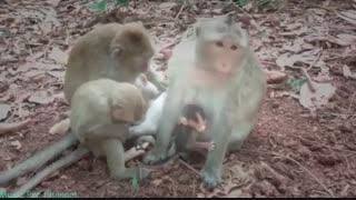 میمون کوچولوی ترسو