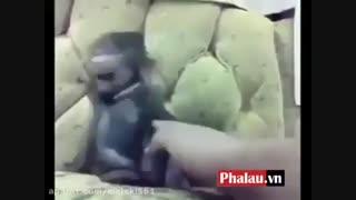 خنده میمون !