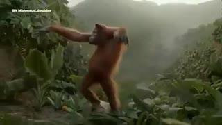 رقص میمون امروزهوس کردم برم توفازانترومیمون!