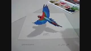 نقاشی سه بعدی طوطی روی کاغذ