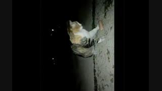 همنشینی با گربه ها (زندگیP5)