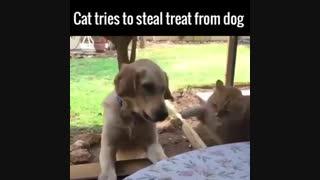 عاقبت سرقت!
