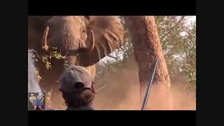 شوخی با فیل