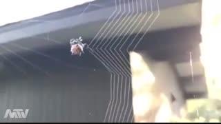 تاربافتن عنکبوت