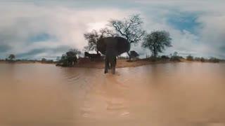 360 درجه -فیل در برکه