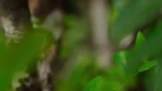 فصل دوم مستند سیاره زمین 2(قسمت سوم Jungles)