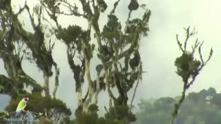 شکارجوجه  پرنده در لانه توسط مار