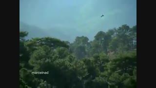 شکار بزکوهی توسط عقاب