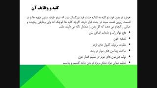 خدمات انجمن کلیوی قزوین