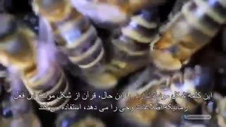اعجاز قرآن - زنبور ماده