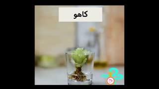 فیلم آموزشی ترفندهای آشپزخانه  – قسمت پنجم