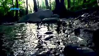 Habib - Donya Remix  - Video