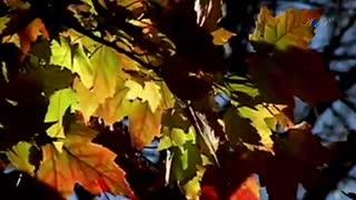 پائیز آرام و زیبا، خدانگهدار! | موسیقی: انیو موریکونه(Ennio Morricone)