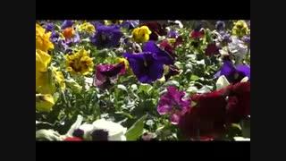 flower-museum90