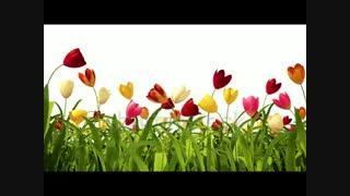 flower-museum90=gol