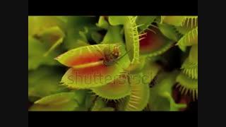گیاهان-museum90
