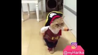 گربه ی جنگجو رو ببینین ! منم میخوام