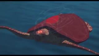 تلیر انیمیشن لاک پشت قرمز