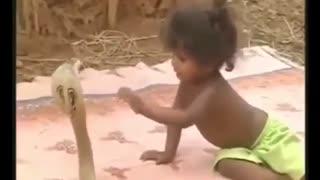 بازی  کودکان  هندی با مار کبری