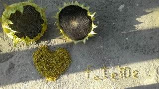 کار هنری من (خیلی سخت بود همش باد میزد بهم میریخت)با گلای آفتاب گردون باغمون