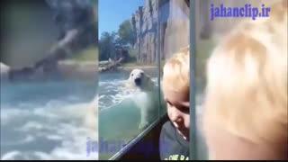 حمله خرس قطبی به بچه کوچولو از چند قدمی