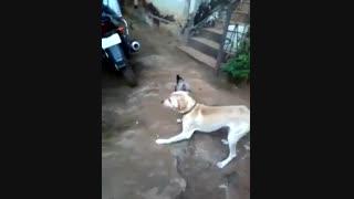 دعوای سگ و خروس 2