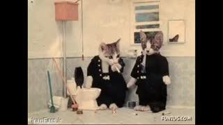 زندگی دوتا گربه !!!!