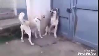 دوبله ی فان از سگ :/