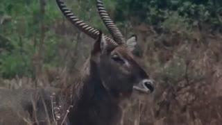 مستند 2017 از حیات وحش افریقا و بسیار جالب و دیدنی