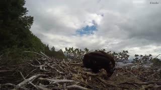 تایم لپس دیدنی از زندگی عقاب ها