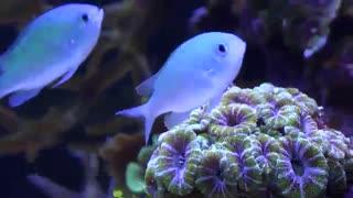 دنیای زیبا و رنگارنگ زیر آب