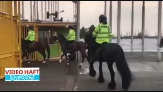 اسب های پلیس در استادیوم آزادی