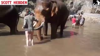 به هواپرت کردن توریست توسط فیل خشمگین جالب و دیدنی