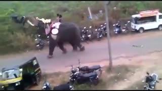 حمله ی حیوانات وحشی به انسان ها