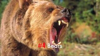 11 صدای عجیب و غریب حیات وحش و دنیای حیوانات وحشی طبیعت