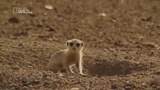 مستندشیرها و حیات وحش نامیبیا در افریقای جنوبی