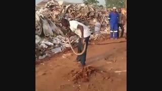 مـردِ آفـریقایی و نمایش با مار کبرا