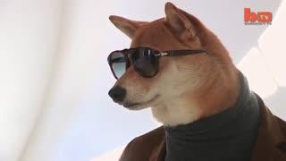 سگی که در مدلینگ لباس کار میکند !