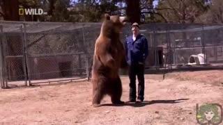 استفاده از خرس  گریزلی برای یک تیزر تبلیغاتی ولی در آخر حمله ور شدن خرس و تلاش برای نجات فرد گرفتار شده در چنگال خرس
